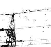 Vögel auf Draht Lizenzfreie Stockfotos