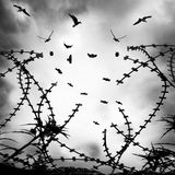 Vögel auf Draht lizenzfreie stockbilder
