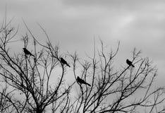 Vögel auf einem Baum, Schwarzweiss-Version Stockfoto
