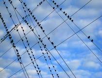 Vögel auf einem Draht Stockfoto