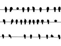 Vögel auf einem Draht Stockfotografie