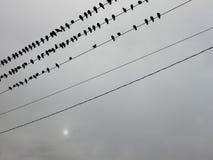 Vögel auf einem Draht Stockbilder