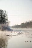 Vögel auf einem gefrorenen Fluss Stockfotografie