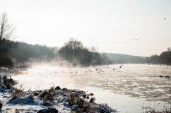 Vögel auf einem gefrorenen Fluss Stockfoto