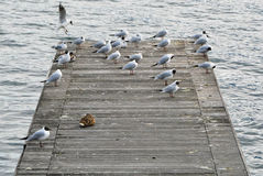 Vögel auf einem Kai stockfotografie