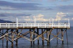 Vögel auf einem Pier Stockfotos