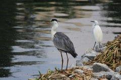 Vögel auf einem Plan zu jagen stockfotografie