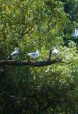 Vögel auf einem Zweig lizenzfreie stockfotografie