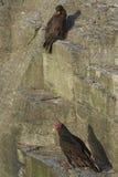 Vögel auf einer Klippe Stockfotos