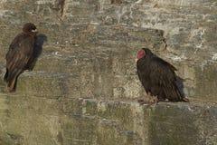 Vögel auf einer Klippe Lizenzfreie Stockfotos