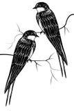 Vögel auf einer Niederlassung Lizenzfreie Stockbilder