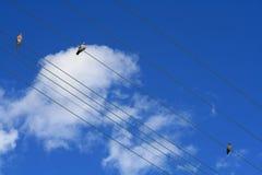Vögel auf elektrischen Drähten stockfotografie