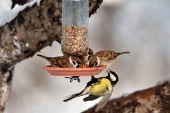Vögel auf Fütterungsplatz Lizenzfreie Stockbilder