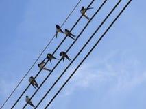 Vögel auf Fernschreiberdraht Stockfotos