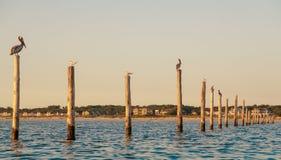 Vögel auf Masten Stockbilder
