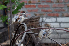 Vögel auf Niederlassungen Stockbild