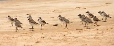 Vögel auf Sand, auf einer Ozeanküste Stockfotos