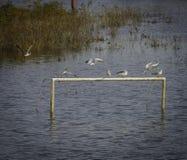 Vögel auf See Stockfotografie
