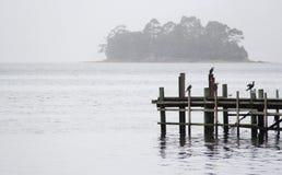 Vögel auf Stingaree-Buchtanlegestelle, Tasmanien, Australien Stockbild