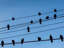 Vögel auf Stromleitungen mit Hintergrund des blauen Himmels Stockbilder