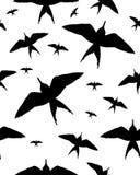 Vögel auf Weiß Lizenzfreie Stockfotos