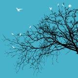Vögel auf Zweigen Stockbild