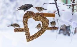 Vögel bei der Winterfütterung Stockbilder