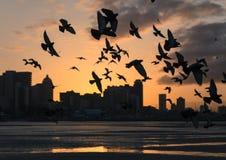 Vögel bei Sonnenaufgang stockfotografie