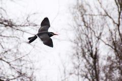 Vögel an Bronx-Zoo lizenzfreies stockfoto