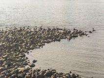 Vögel in den Felsen Lizenzfreie Stockbilder