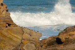 Vögel in den Felsen und große Wellen im Ozean Stockfotos