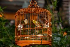 Vögel in den Käfigen, die am Vogel hängen, arbeiten - 10 im Garten Stockbilder