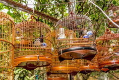 Vögel in den Käfigen, die am Vogel hängen, arbeiten - 13 im Garten Stockbilder
