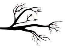 Vögel in der Liebe auf Frühlingsbaum stock abbildung