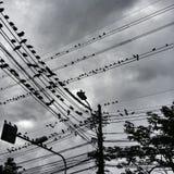 Vögel in der Stadt Stockbild