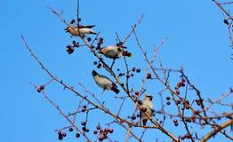 Vögel der Steppen Stockbild