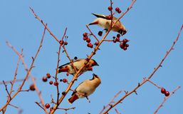Vögel der Steppen Lizenzfreies Stockfoto