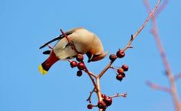 Vögel der Steppen Lizenzfreie Stockbilder