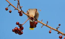 Vögel der Steppen Stockfoto