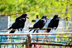 Vögel der Steppen Lizenzfreie Stockfotografie