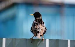 Vögel der Steppen Lizenzfreie Stockfotos