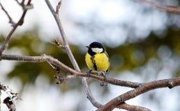 Vögel der Steppen Stockfotografie
