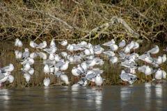 Vögel der wild lebenden Tiere im Winter stockfotos