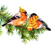 Vögel in der Winterkleidung, Hut und Schal, auf Kiefernweihnachtsbaum Vektor Abbildung