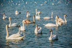 Vögel des Meeres Lizenzfreie Stockbilder