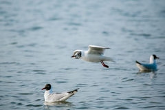 Vögel des Meeres Stockbild
