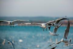 Vögel des Meeres lizenzfreies stockbild