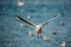 Vögel des Meeres Stockbilder