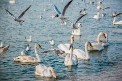 Vögel des Meeres stockfotografie