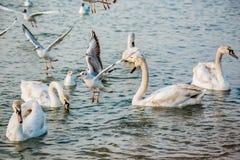 Vögel des Meeres stockfotos